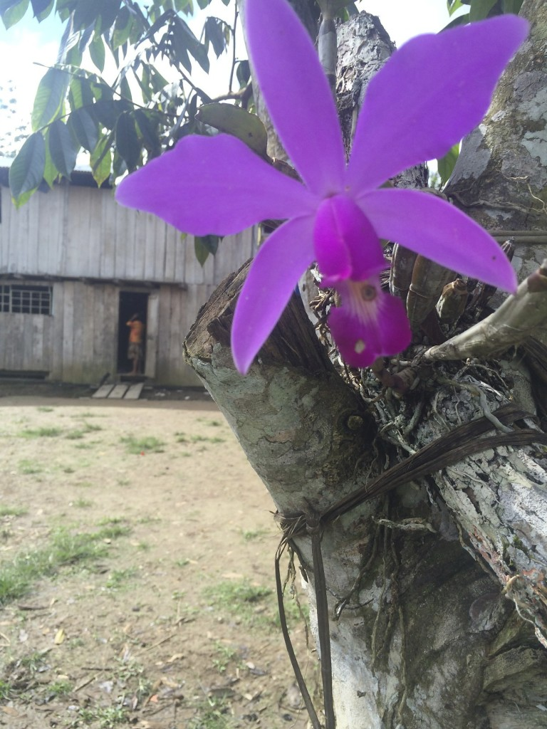 A wild orchid growing in the village.