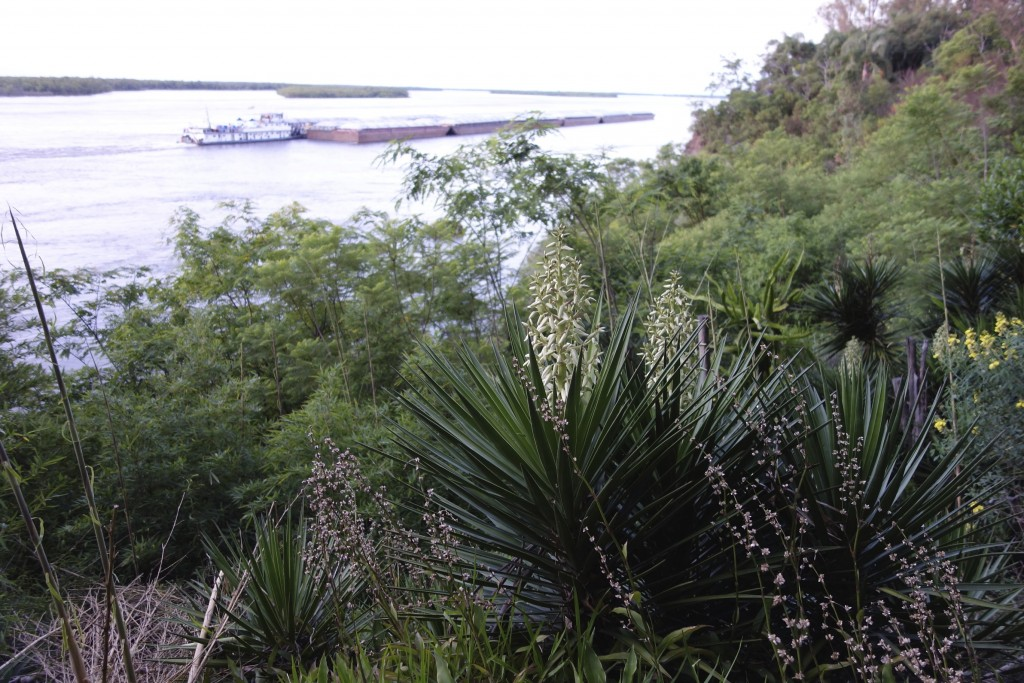 On the Rio Parana, in the far north of Argentina, the vegetation turned tropical and the river ran muddy. This river is the second longest in South America. La Paz, Argentina.
