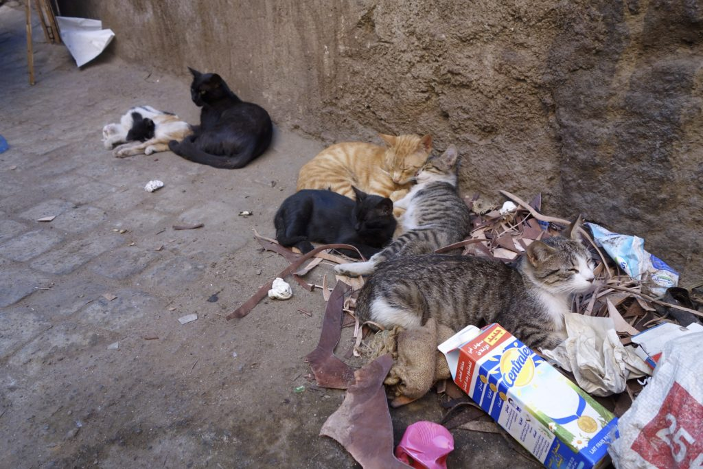 What South America is for homeless street dogs Morocco is for cats. They are everywhere we go in Morocco. Marrakech, Morocco.