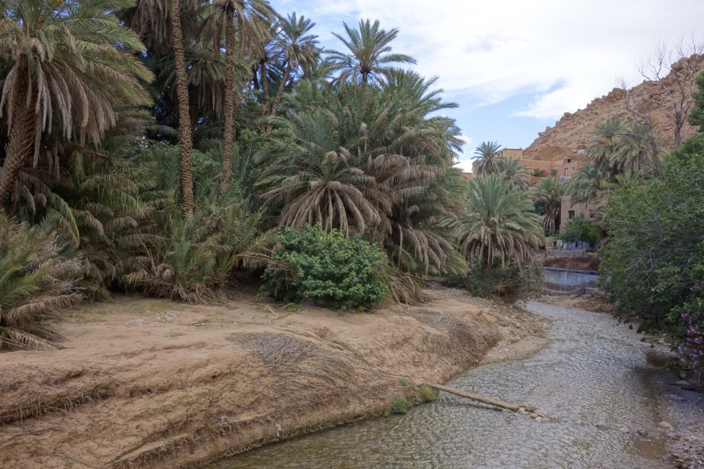 Water is everything in Morocco. Here the Todra River brings the valley to life at the edge of the Sahara Desert. High Atlas Mountains, Morocco