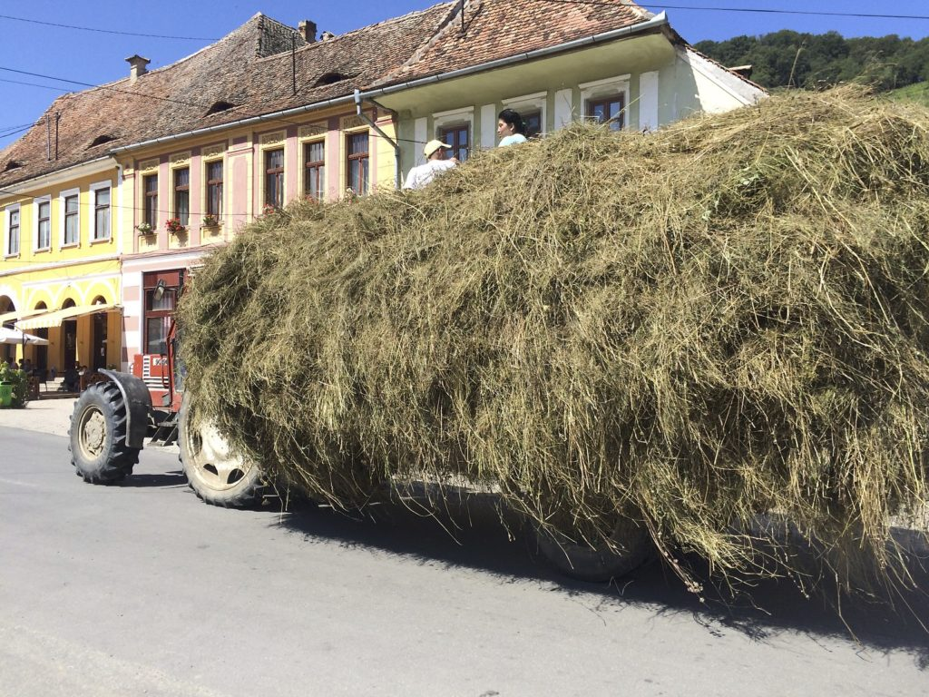 Make hay while the sun shines. Late August in Romania and we have seen enough hay cutting, raking, turning, piling, hauling, and storing to write a book on the matter.