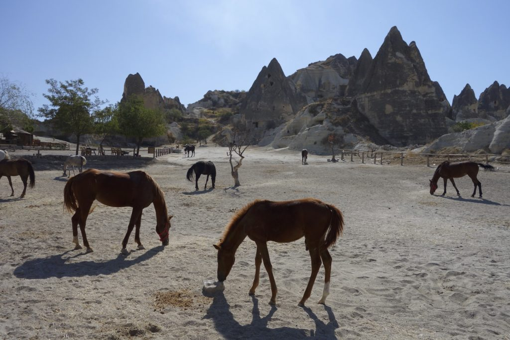 The eroded hills of Cappadocia consist of deep layers of compacted volcanic ash (tuff). This soft stone-like material can be dug and cut relatively easily by simple bone or metal tools. Over the millennia the hills have been hollowed out to make homes, churches, monasteries, stables, and pigeon roosts. Entire cities have been discovered underground able to hold thousands of people. Göreme, Turkey.